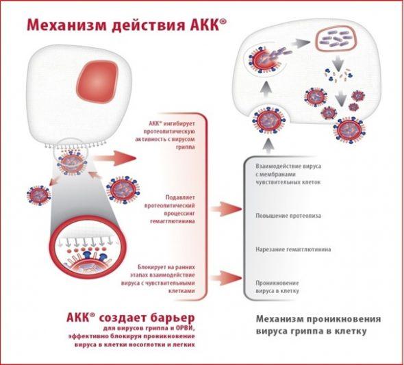 Эффективность АКК