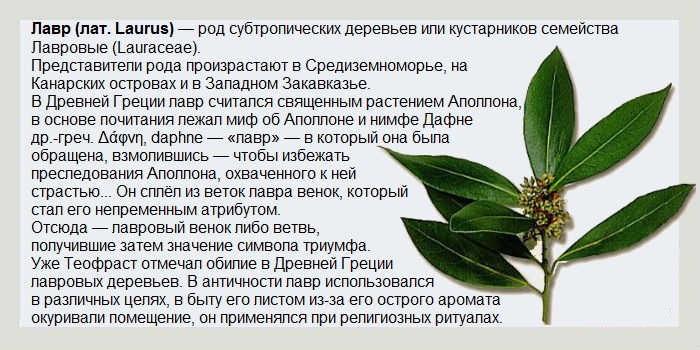 лавровый лист от гайморита рецепт ингаляции